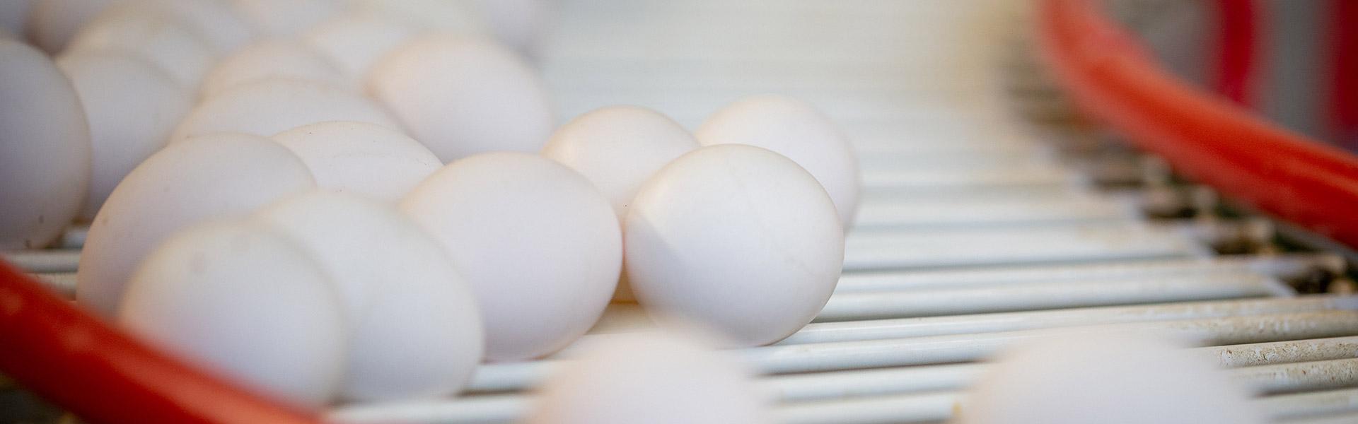 Eier von glücklichen Freilandhühnern